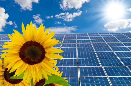 Zdjęcie XXL Nowe ogniwa słoneczne i słoneczniki