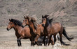 Herd of horses on a background of mountains