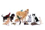 Fototapeta Zwierzęta - Gruppe verschiedene Haustiere