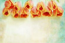 Border Of Orange Tulips