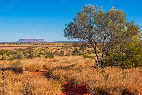 Printed kitchen splashbacks Australia Australian bush (outback)
