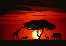 Animals In The Savanna