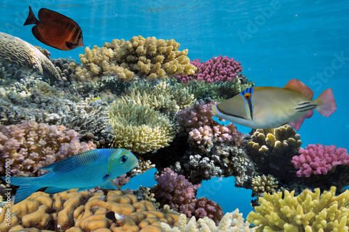 Tuinposter Koraalriffen colorful coral reef with hard coral and exotic fish