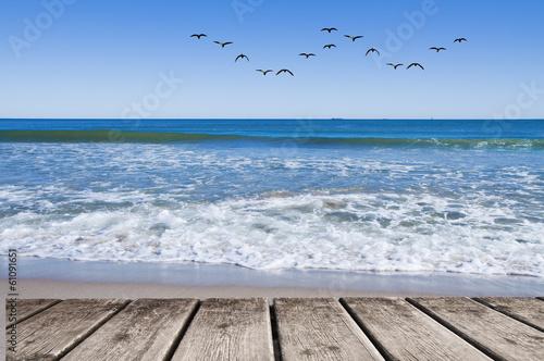 bandada de gabiotas sobre el mar