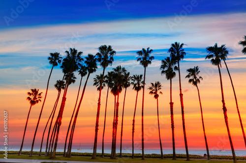 Poster Palmier California sunset Palm tree rows in Santa Barbara