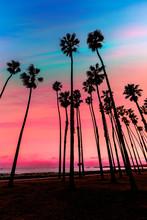 California Sunset Palm Tree Ro...