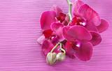 Piękne kwiaty orchidei na różowym tle