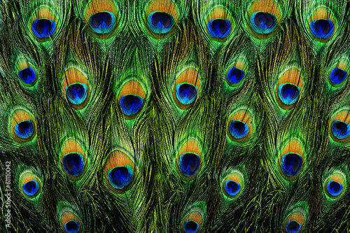 In de dag Pauw pattern of colorful peacock feathers