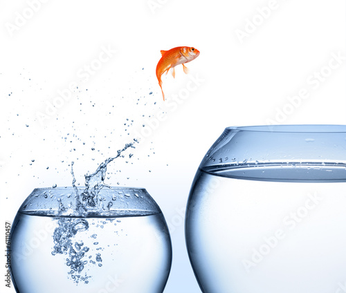 Cuadros en Lienzo goldfish jumping out of the water - improvement concept