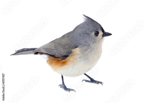 Deurstickers Vogel Tufted Titmouse Isolated