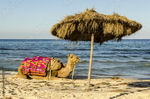 Staande foto Tunesië Kamel am Strand von Sousse, Tunesien