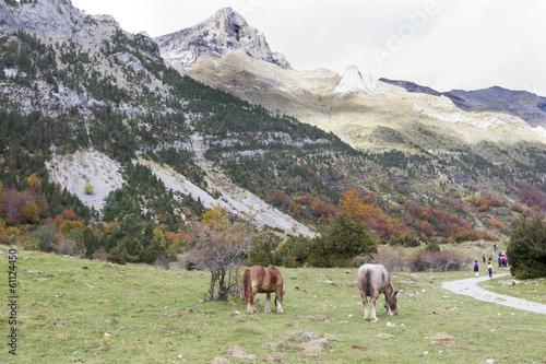 Photo Stands Grocery horses grazing in a meadow surrounded by mountains