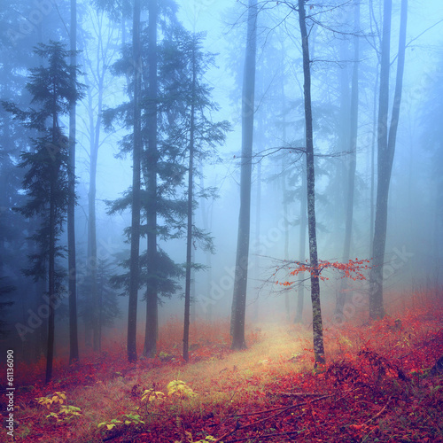 Foto op Canvas Weg in bos Autumn mysterious forest