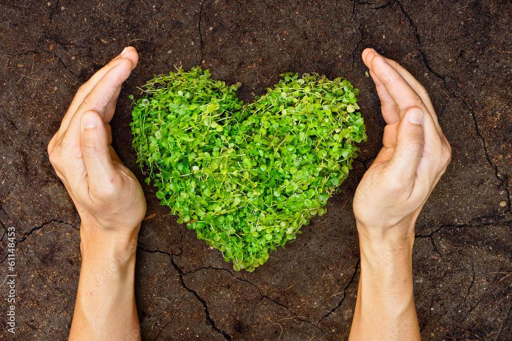 Fototapeta hands holding green heart shaped tree on crack earth