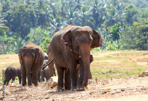 Poster Olifant Elephants in park