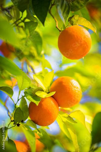 Fényképezés orange tree