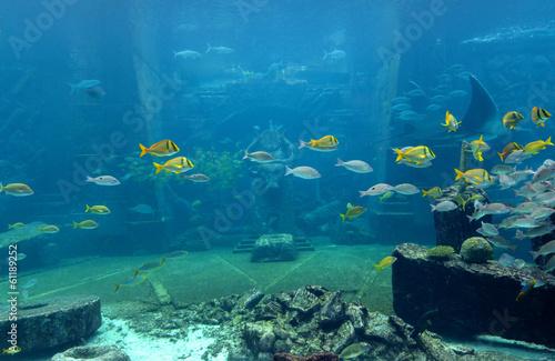 Foto op Plexiglas Koraalriffen Underwater scene with a lot of colorful fish