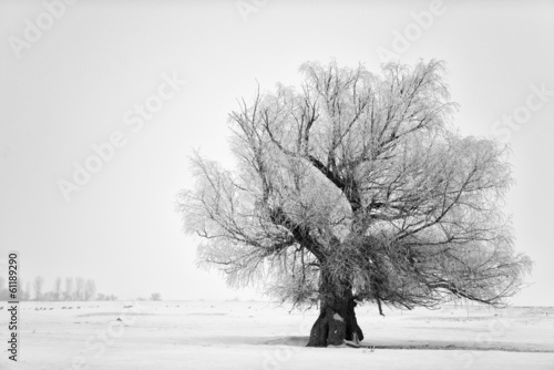 Fotobehang Bomen Beautiful tree in winter time in February 2014, Romania