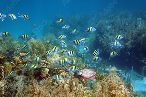 Poster Coral reefs Shoal of fish in a coral reef seabed