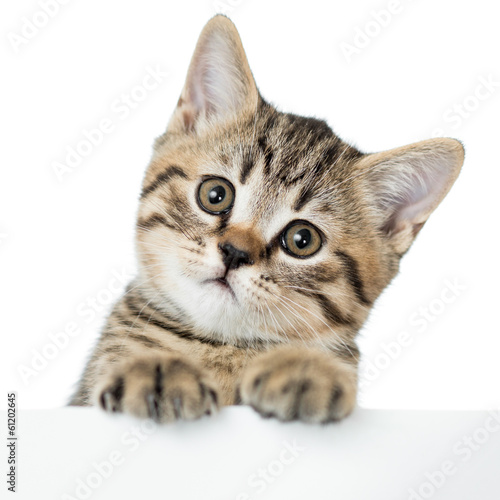 Papiers peints Chat cat kitten peeking out of a blank placard, isolated on white bac