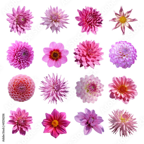 Canvas-taulu collection dahlias roses