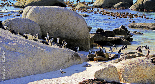 Fotografering  African Penguin colony