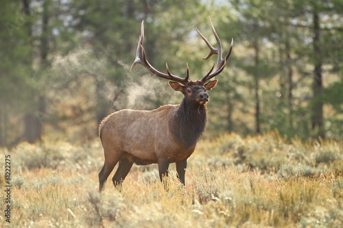Smoking Elk Canvas Print