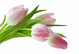 Fototapeta Kwiaty - Piękne mokre tulipany