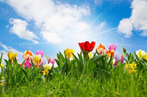 Plakat Tulipanowe pole Wielkanoc