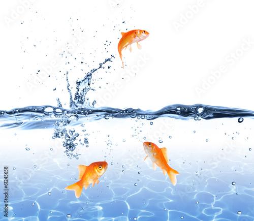 zlota-rybka-wyskakuje-z-wody-koncepcja-ucieczki