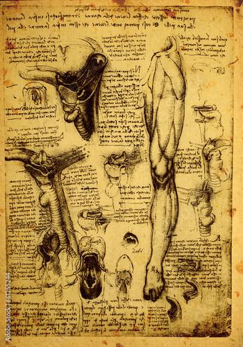 Fototapeta Anatomy