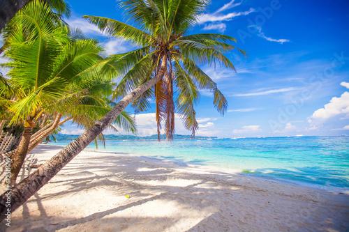 Foto auf AluDibond Palms Coconut Palm tree on the white sandy beach