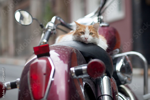 Scooter kitten on red retro motor scooter