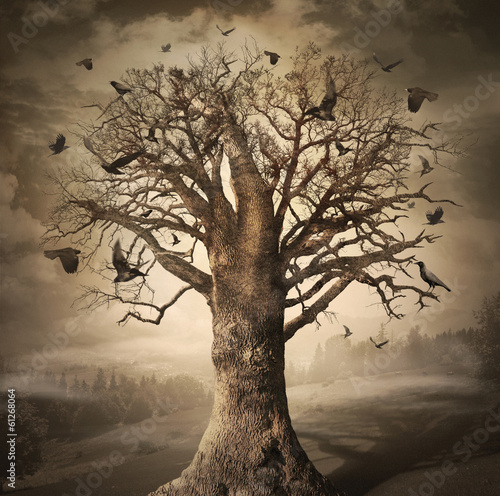 Foto op Aluminium Olifant Magic Tree with Crows