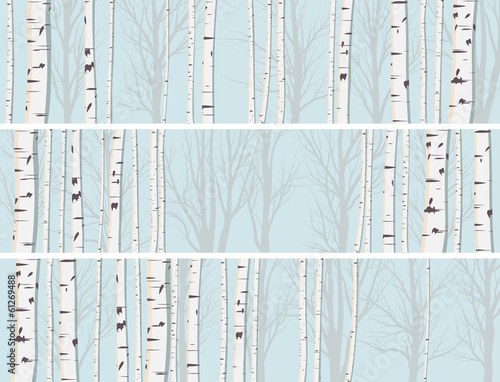 Horizontal banners of birch trunks forest. Wall mural