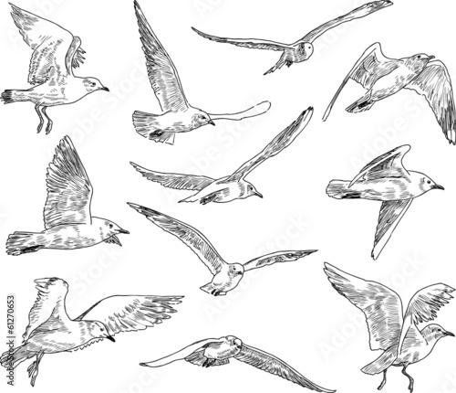 flock of gulls Wall mural