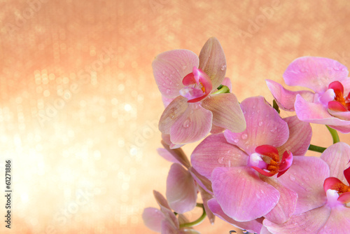 Beautiful blooming orchid  on light color background