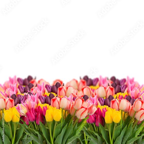 Foto op Plexiglas Tulp Bunch of tulips flowers border