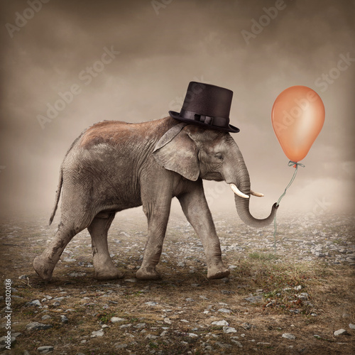 Montage in der Fensternische Bild des Tages Elephant with a balloon