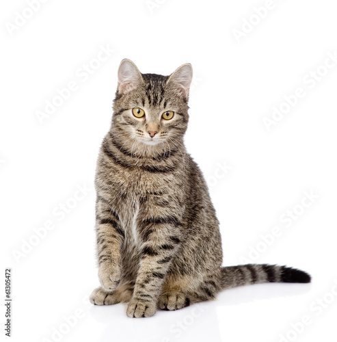 Photo cat sitting in front and looking at camera. isolated on white