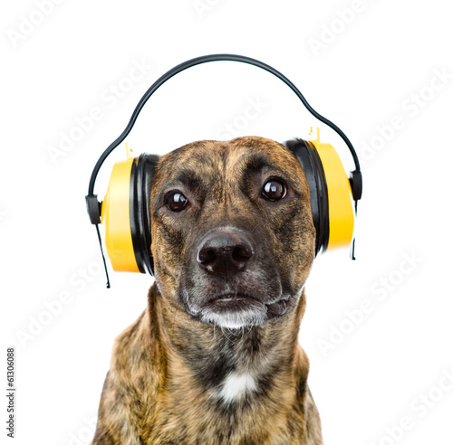 dog with headphones for ear protection from noise. isolated Tablou Canvas