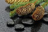 Fototapeta Kamienie - Szyszki na kamieniach do spa