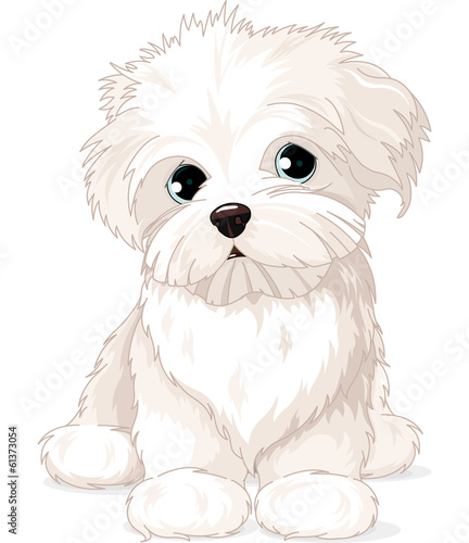 Fototapeta Maltese Puppy Dog