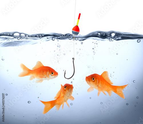 Cuadros en Lienzo  goldfish in danger - concept deception