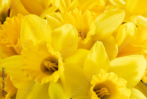Foto op Plexiglas Narcis Close up bunch of yellow daffodils