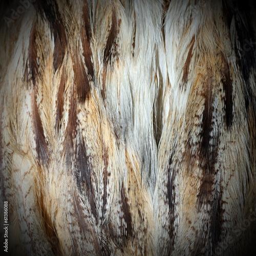 eurasian eagle owl  plumage Wall mural