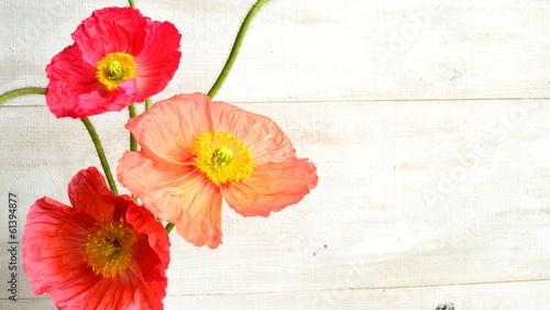 In de dag Poppy Colorful poppys