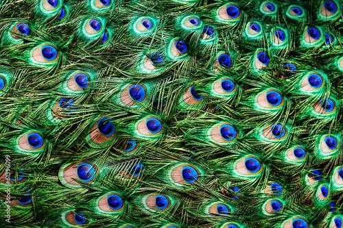 Foto op Plexiglas Pauw Colorful peacock feathers background
