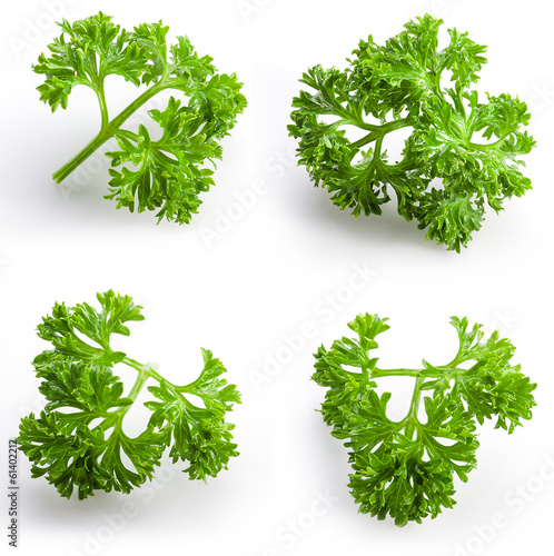 Fototapeta Collection of parsley isolated on white obraz