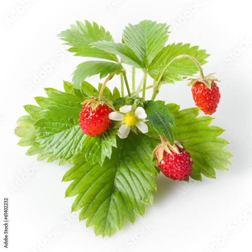 Wild strawberry isolated on white